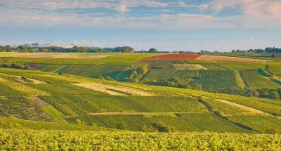 Vineyards of Sancerre