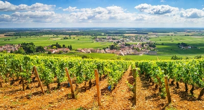 Vineyards in the Nivernais Loire valley