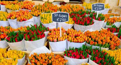 Tulip markets of Amsterdam