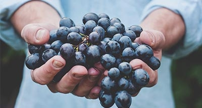 A lovely bunch of grapes