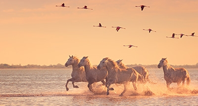 Wild horses and pink flamingos at sunset