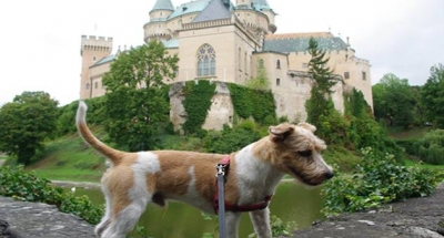 Dog and castle